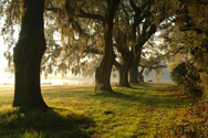 One of over 150 published photographs for Mansfield Plantation Bed & Breakfast.  Visit mansfieldplantation.com to see more.